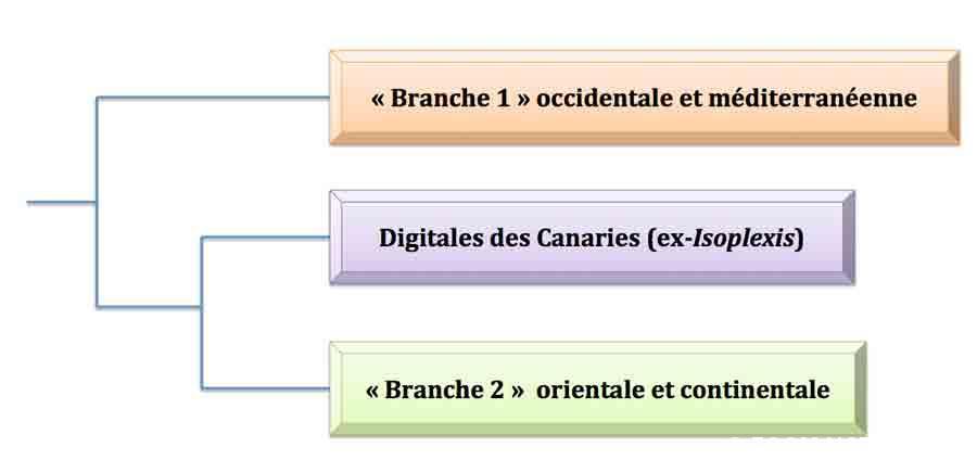 digitales-arbre-principal