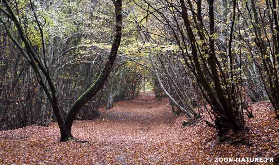 feuilles-mortes-chute