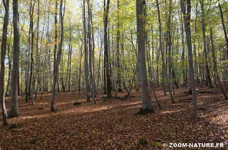 feuilles-mortes-hetraie