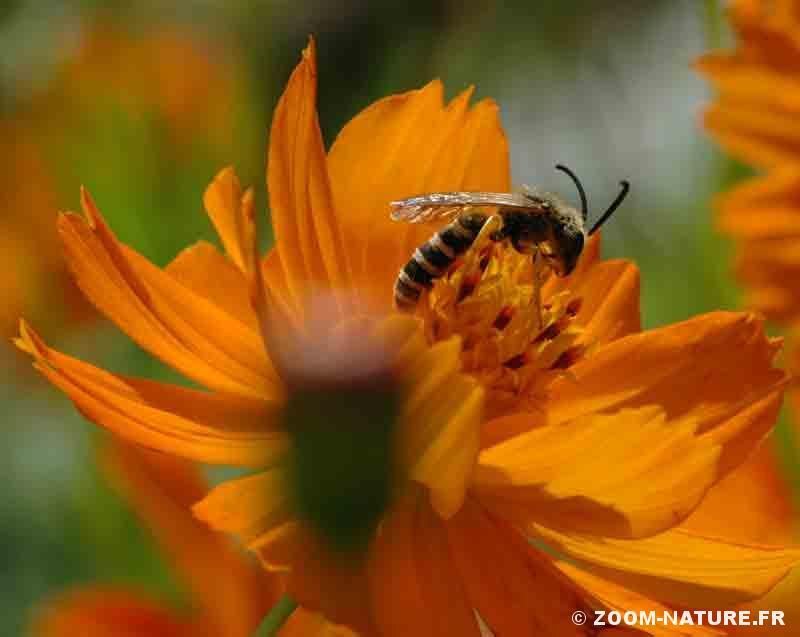 produit pour attirer les abeilles robotfleur produit pour attirer les abeilles exprience. Black Bedroom Furniture Sets. Home Design Ideas