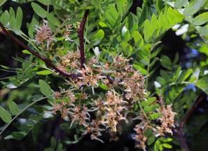 fevier-fleursfemelles