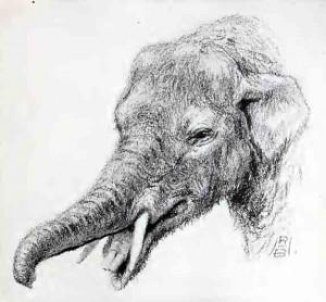 Les Gomphothères qui font partie du groupe des Mastodontes au sein des Proboscidiens avaient quatre défenses presque droites.