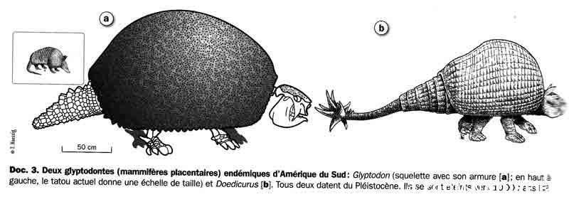 megaamsud-glyptodonte