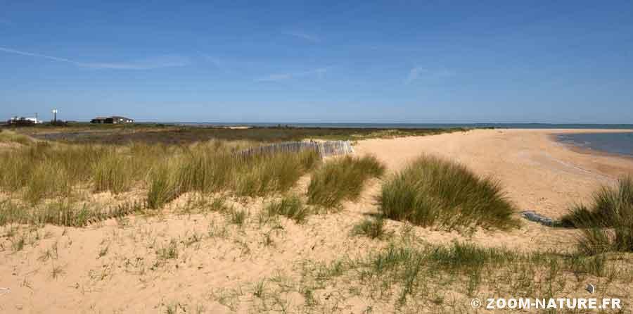 dune-panorama1