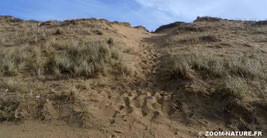 dune-panorama2