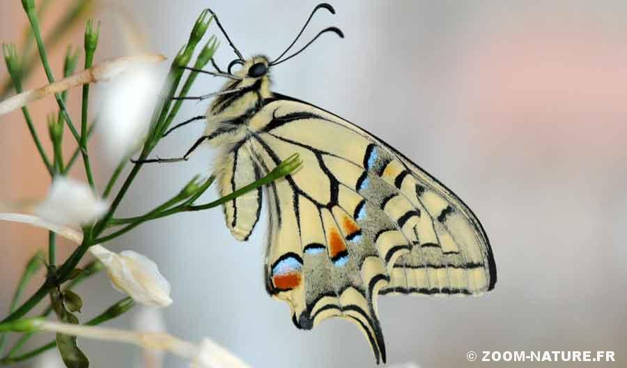 machaon-pano