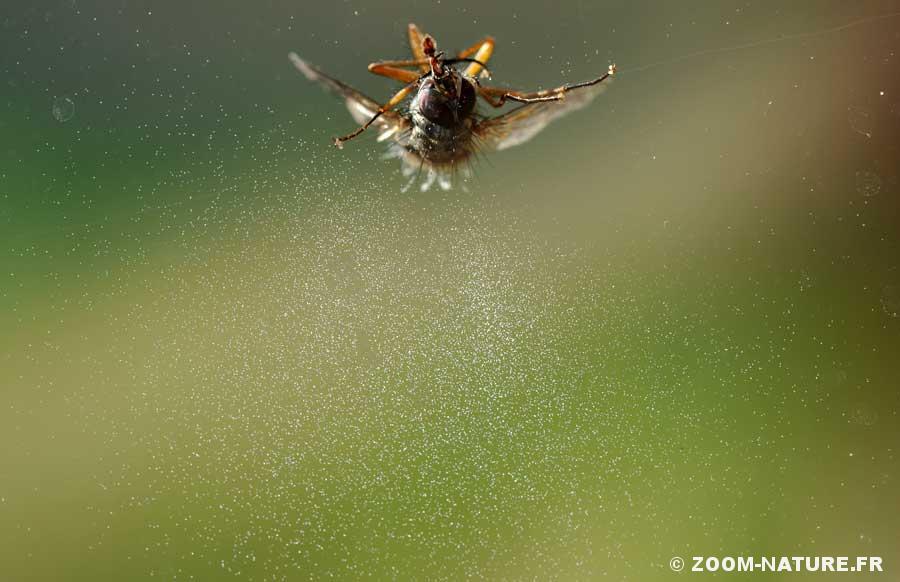 entomop-halo