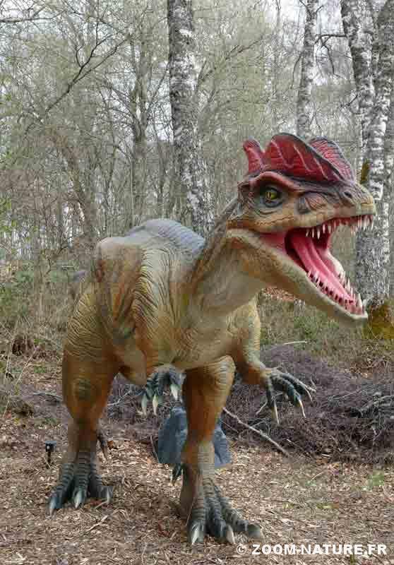 Dinosaures combien d 39 esp ces ont exist zoom nature - Liste dinosaures ...