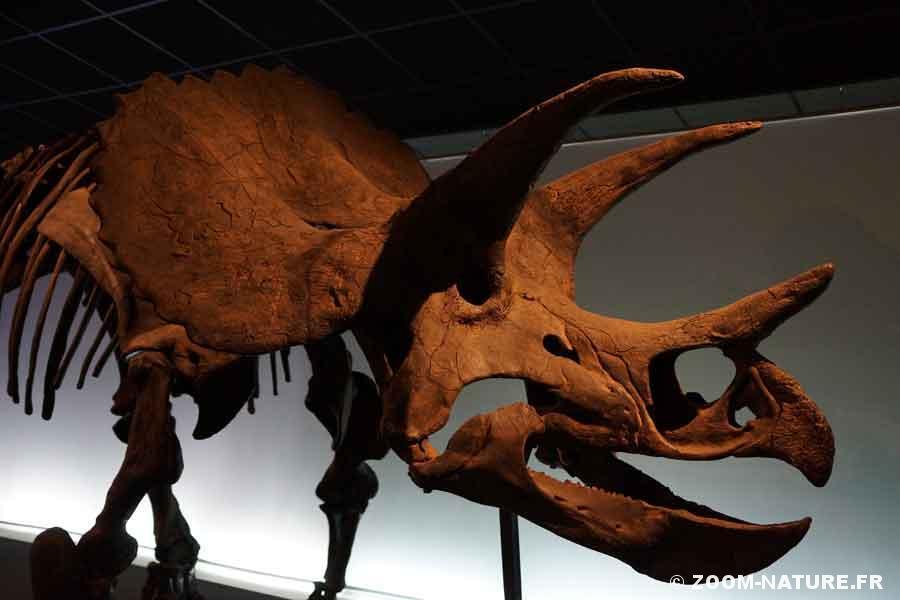 dinosp-triceratopspano