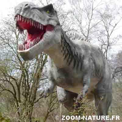 Dinosaures combien d 39 esp ces ont exist zoom nature - Liste de dinosaures ...