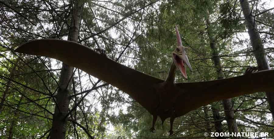 dinow-pterosaure