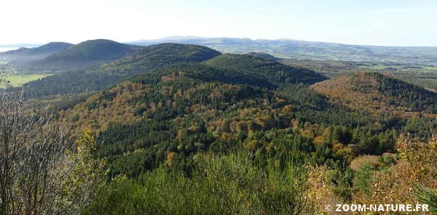 pinede-panorama