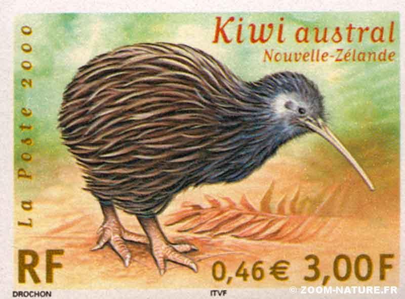 ratite-kiwi1