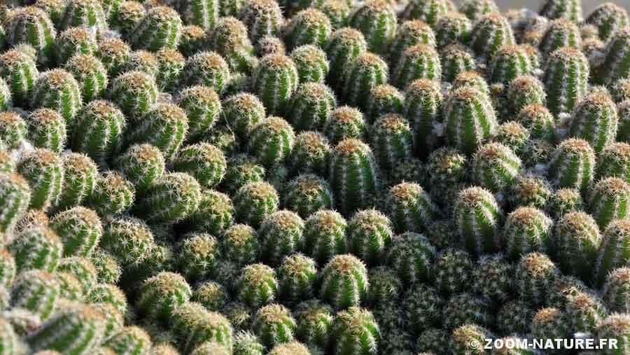 cactus-herbipano