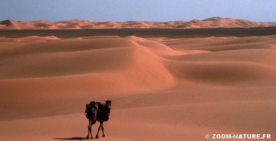camel-panofin