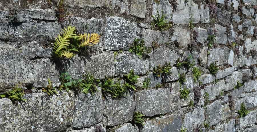 murs-intropano