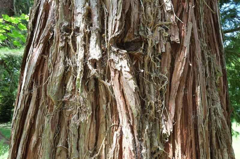 quiz-sequoia
