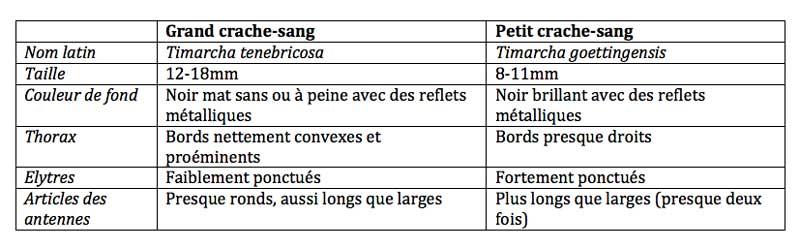 Tableau comparatif des deux espèces de crache-sang les plus communes en France