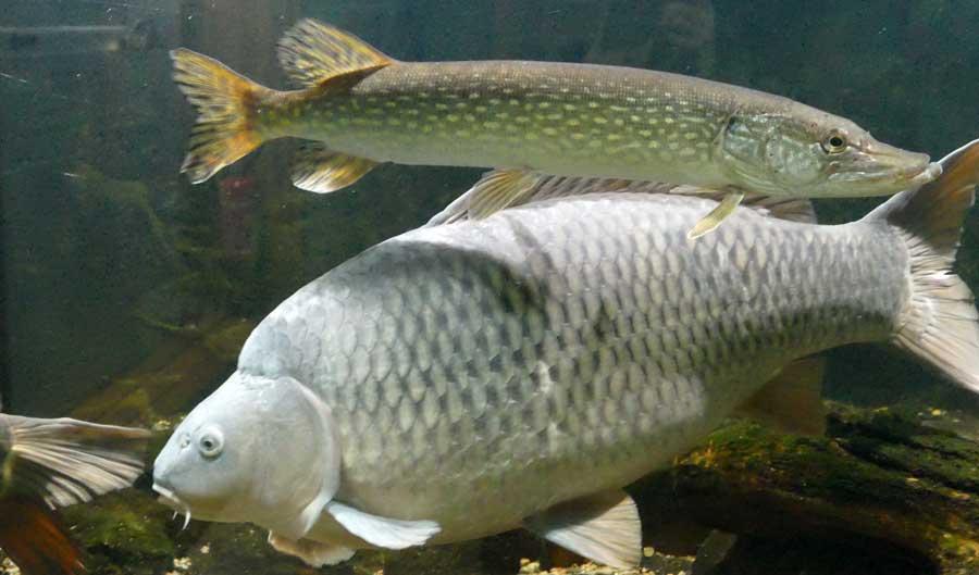 trouver beaucoup de poissons datant service première Agence internationale de rencontres