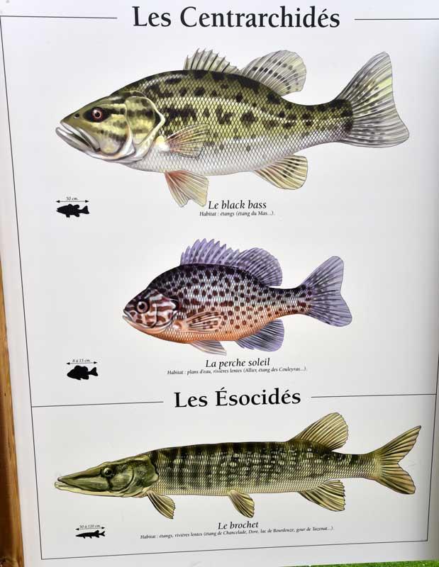 Beaucoup de poissons datant des exemples de profil