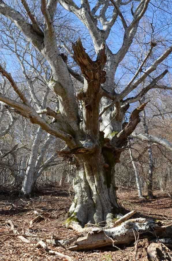 l 39 arbre vivant une m galopole de micro habitats zoom nature. Black Bedroom Furniture Sets. Home Design Ideas