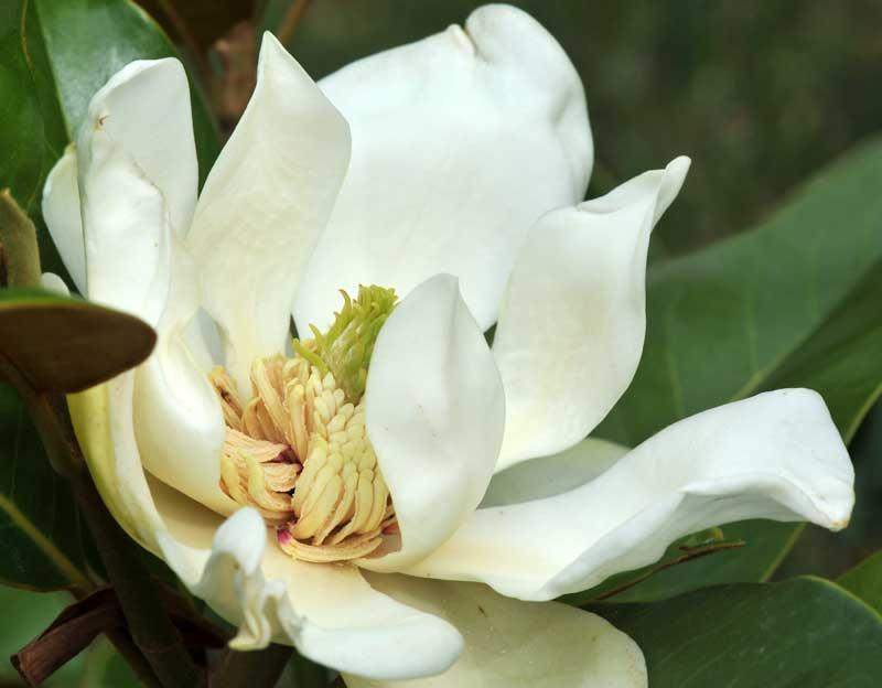 une fleur de Martin 24 septembre trouvé par Ajonc Magno-chuteetam