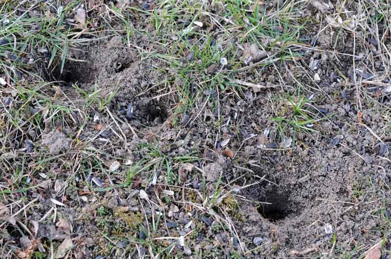 Un pic tr s terre terre zoom nature - Fourmis dans le jardin ...