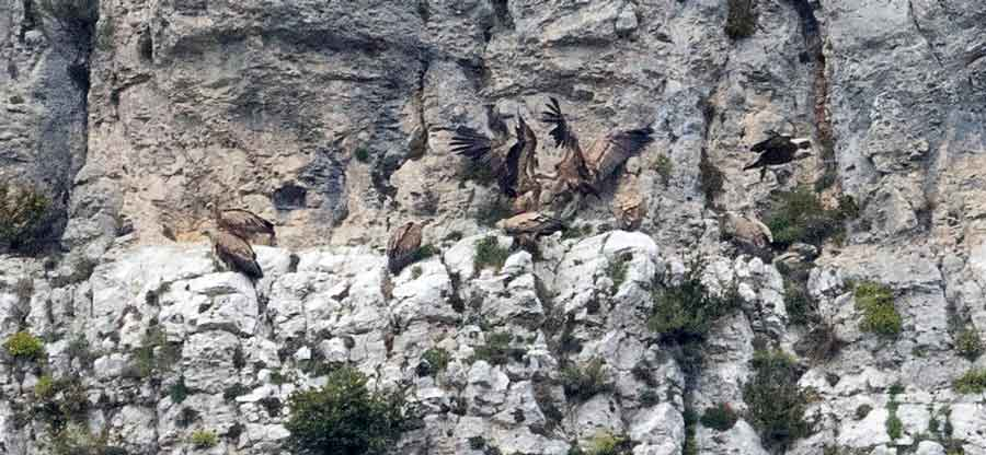Oiseaux datant site