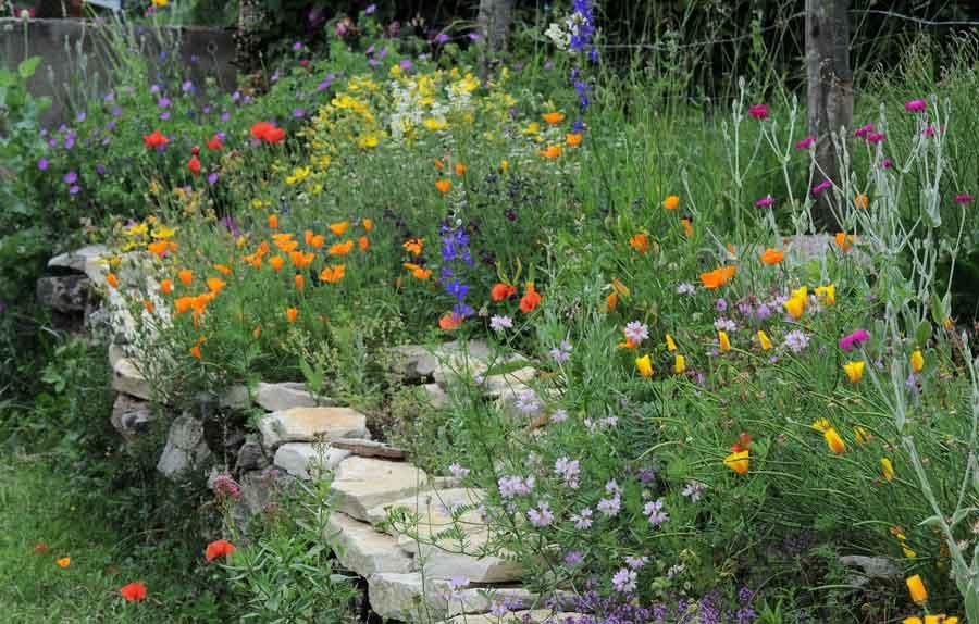 Les Jardins Fleuris Pourvoyeurs De Pollinisateurs