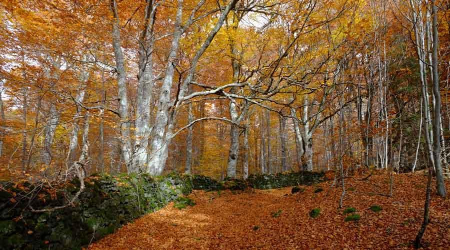 L'automne, une saison clé | Zoom Nature